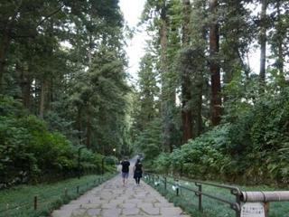 樹齢380年の杉並木